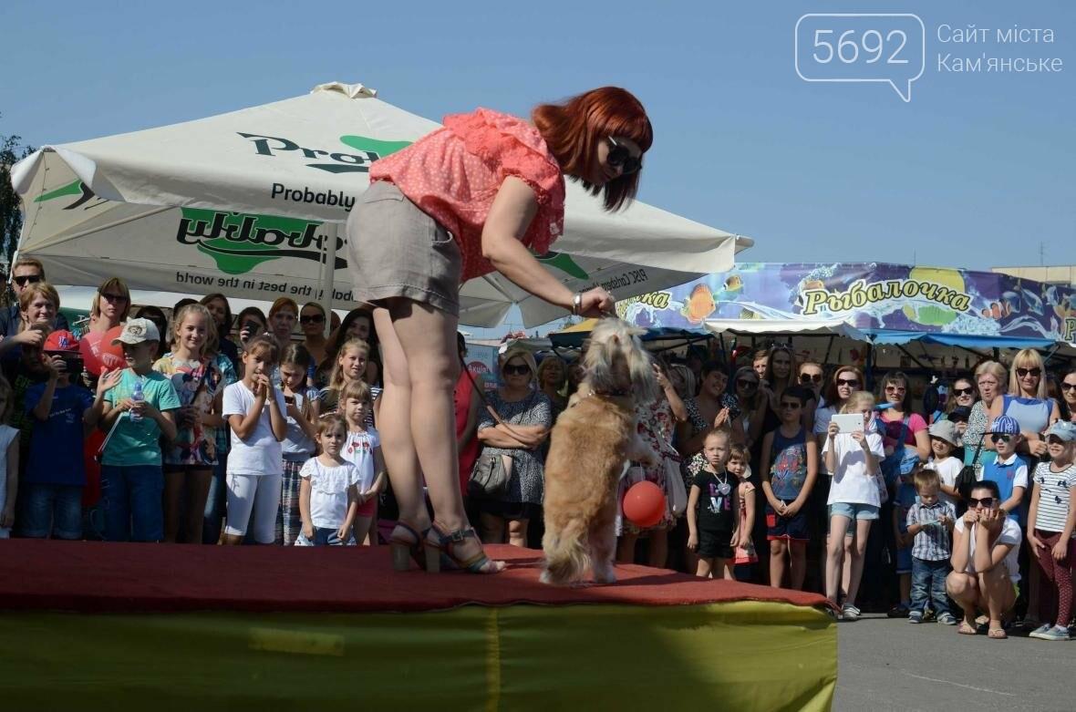 В Каменском дефилировали собаки, фото-7