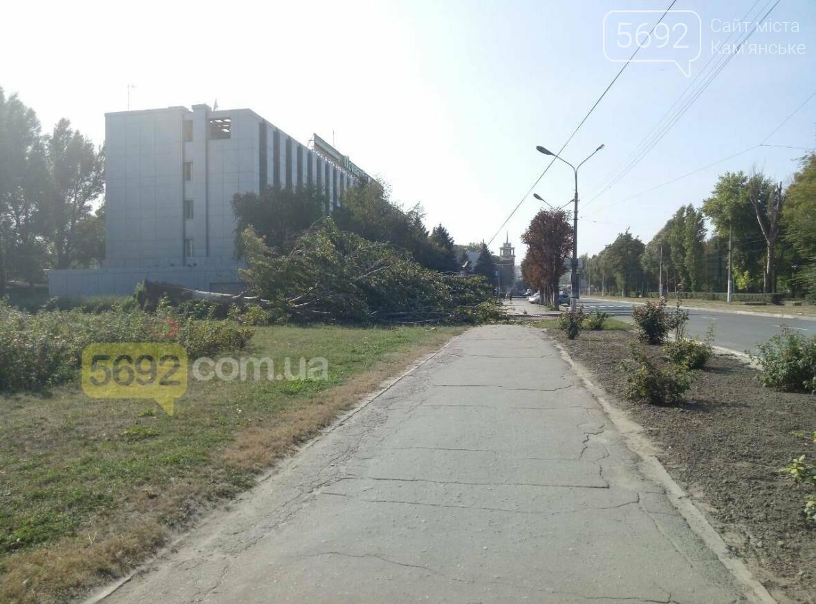 В Каменском упало дерево и зацепило линии электропередач, фото-1