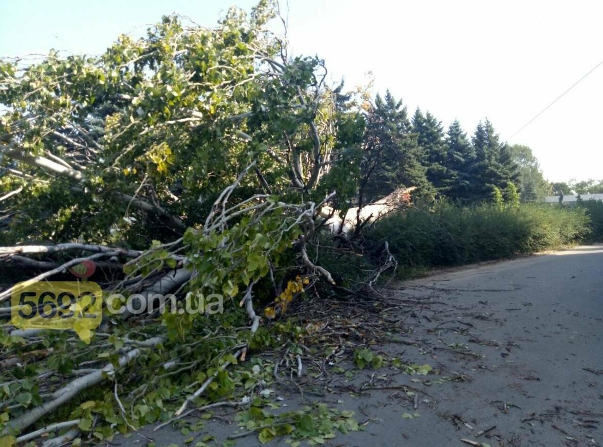 В Каменском упало дерево и зацепило линии электропередач, фото-3