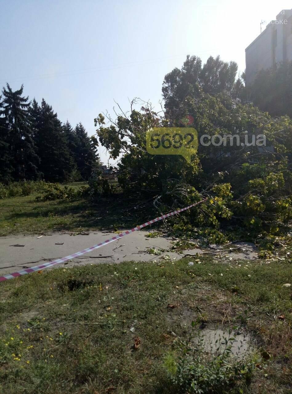 В Каменском упало дерево и зацепило линии электропередач, фото-5