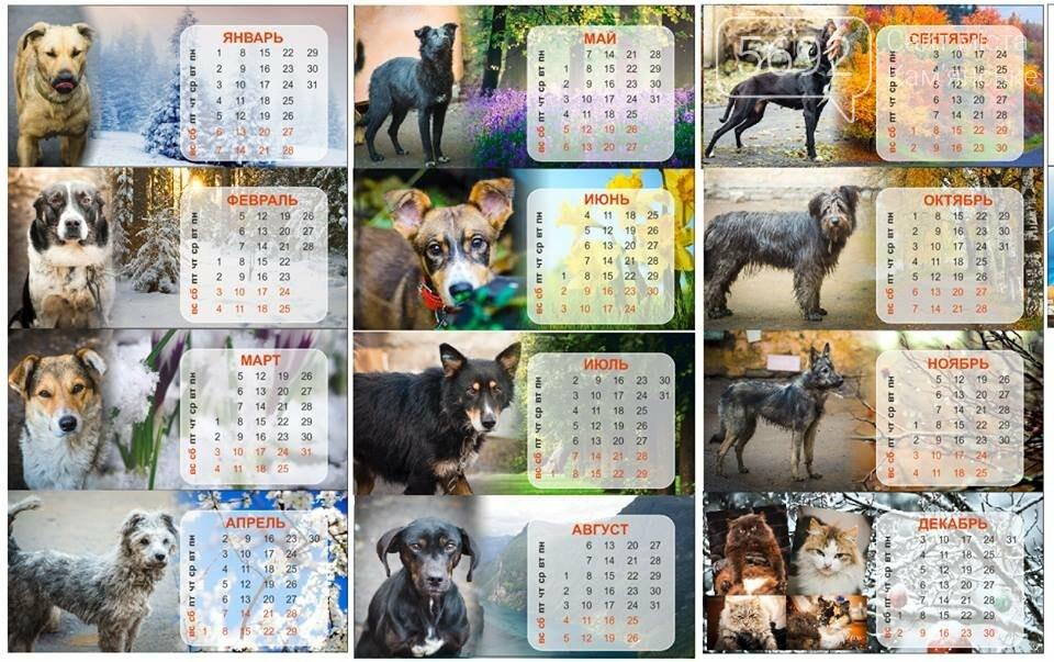 Каменской «Зоощит» выпускает календарь с брошенными животными , фото-1