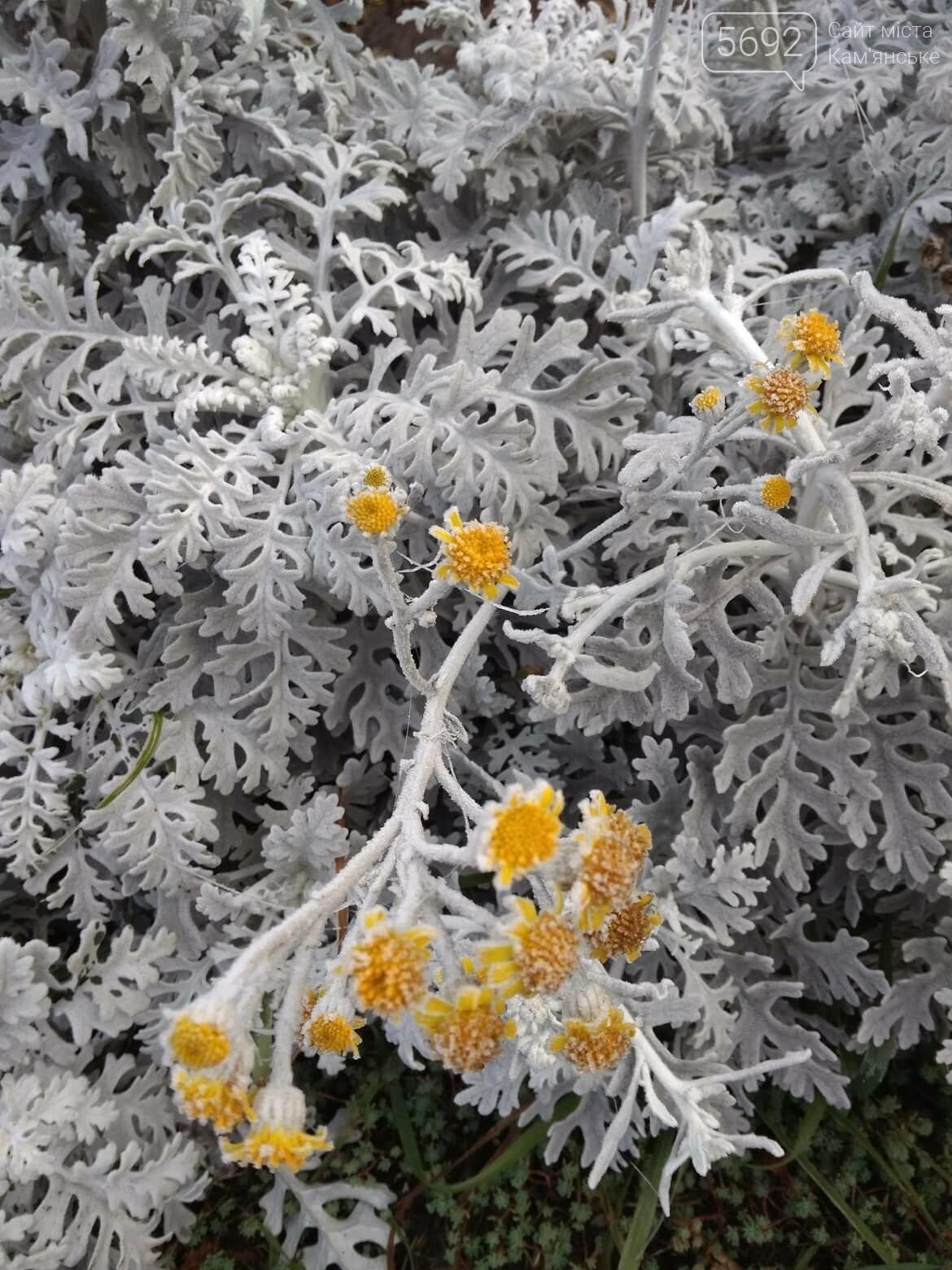 Туман и морозы: какой будет погода в Каменском в ближайшие дни, фото-3