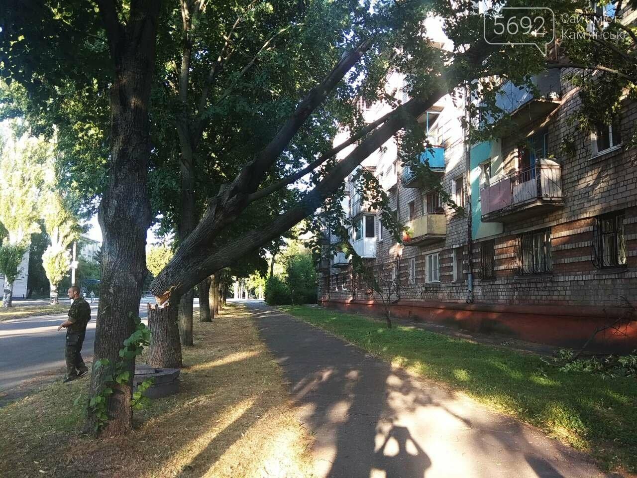 В Каменском огромное дерево упало на окна жилого дома , фото-10