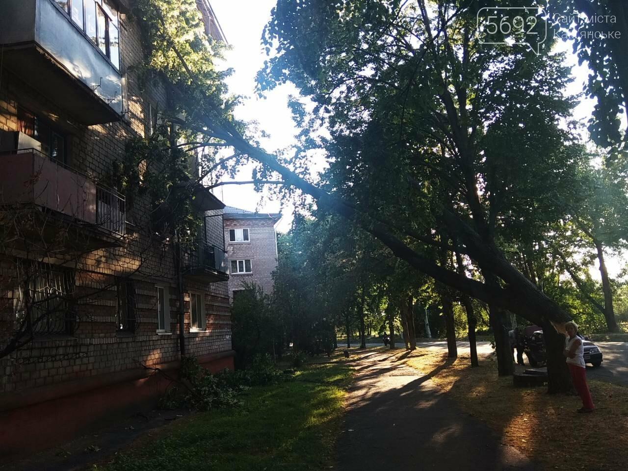 В Каменском огромное дерево упало на окна жилого дома , фото-4