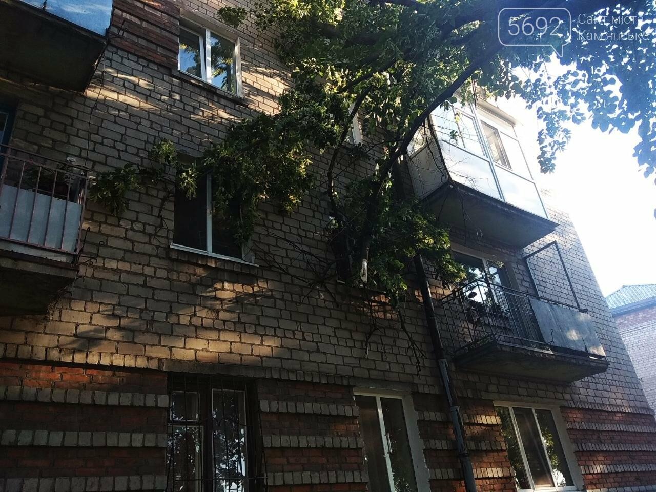 В Каменском огромное дерево упало на окна жилого дома , фото-8