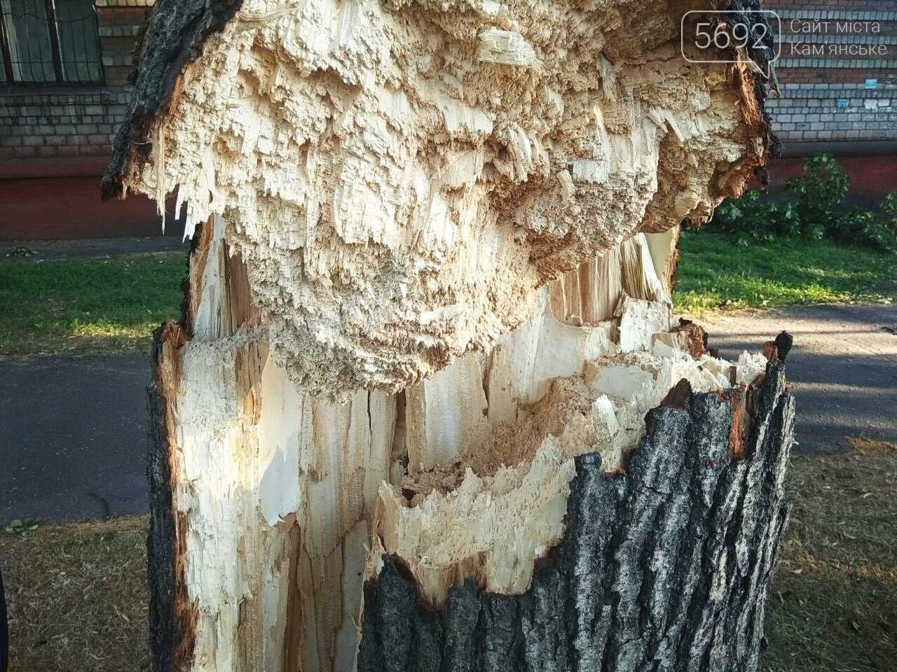 В Каменском огромное дерево упало на окна жилого дома , фото-12