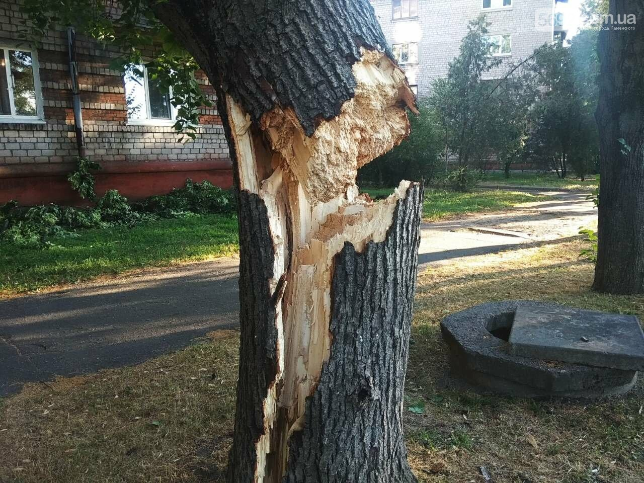 В Каменском огромное дерево упало на окна жилого дома , фото-6