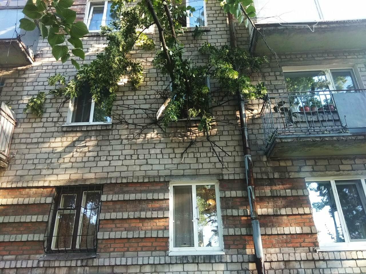 В Каменском огромное дерево упало на окна жилого дома , фото-11