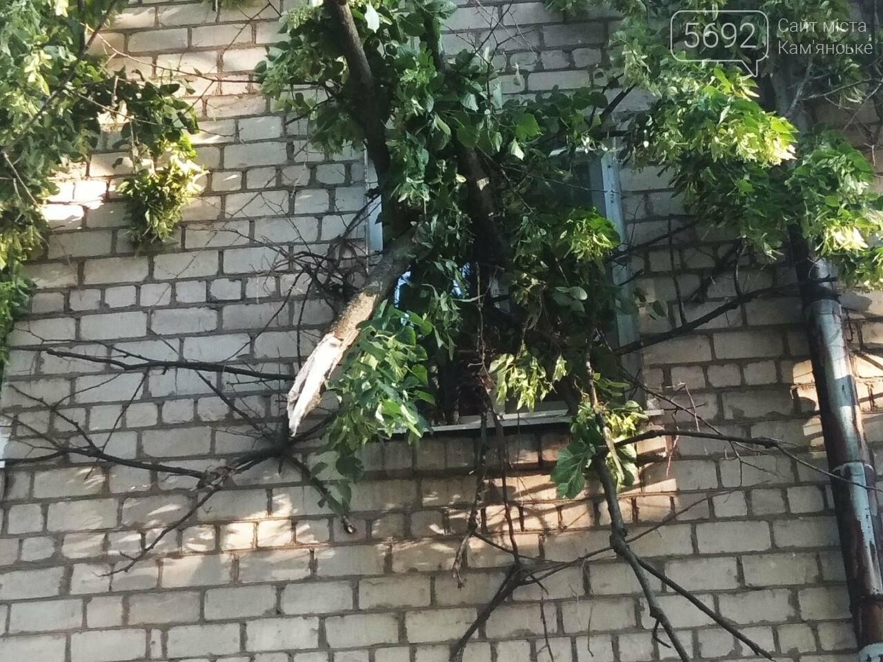 В Каменском огромное дерево упало на окна жилого дома , фото-1