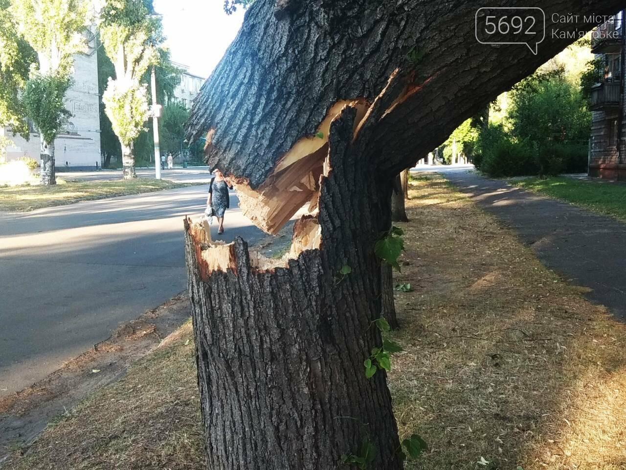 В Каменском огромное дерево упало на окна жилого дома , фото-2