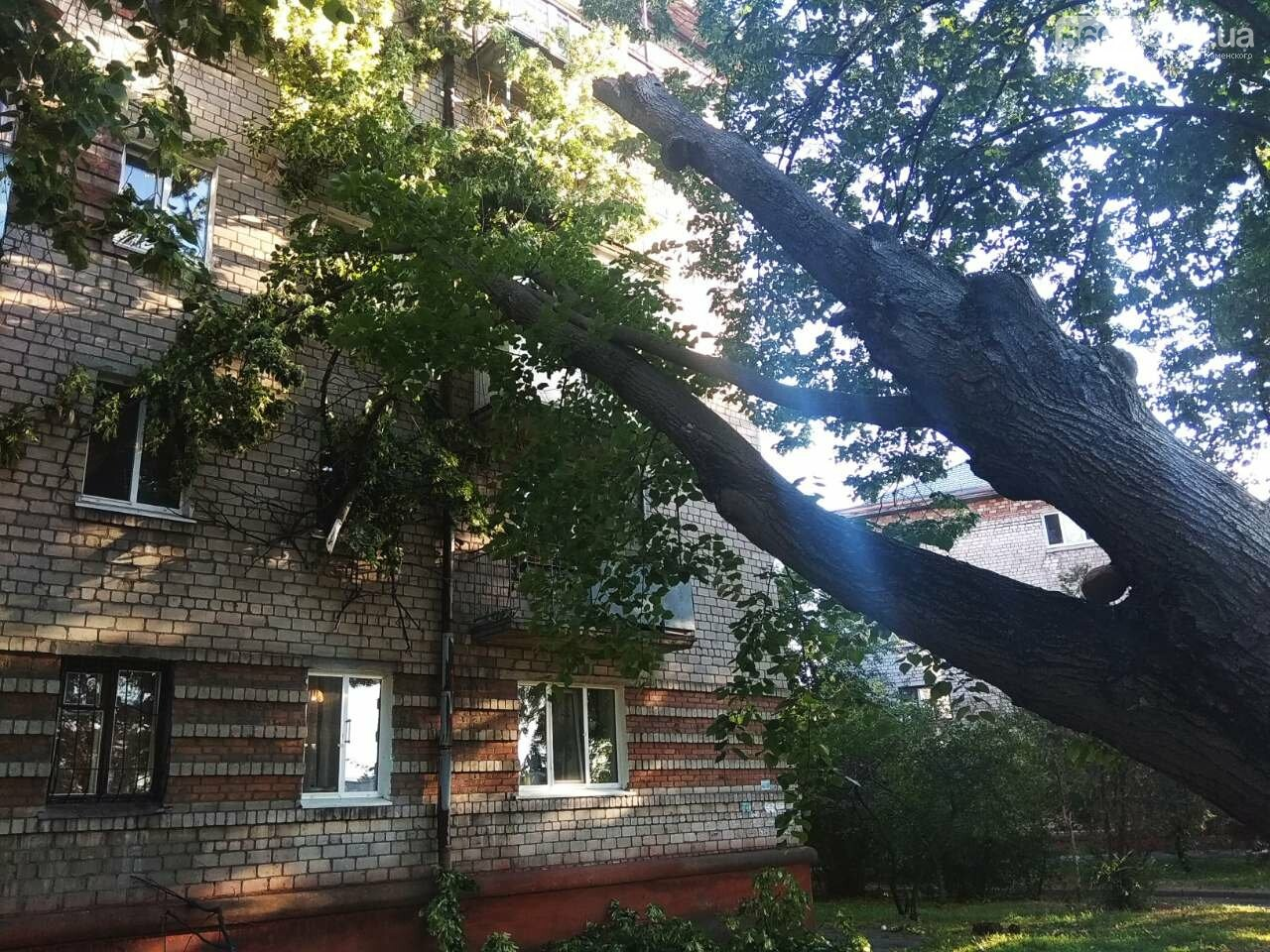 В Каменском огромное дерево упало на окна жилого дома , фото-5