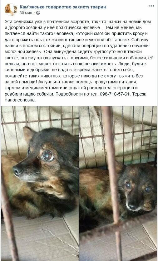 «Приютите кроху»: зоозащитники Каменского ищут хозяина для собаки, фото-1