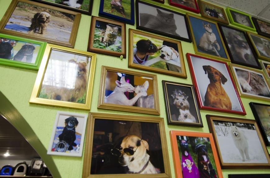 Каменской зоомагазин «Пес Барбос» отпраздновал день рождения, фото-6