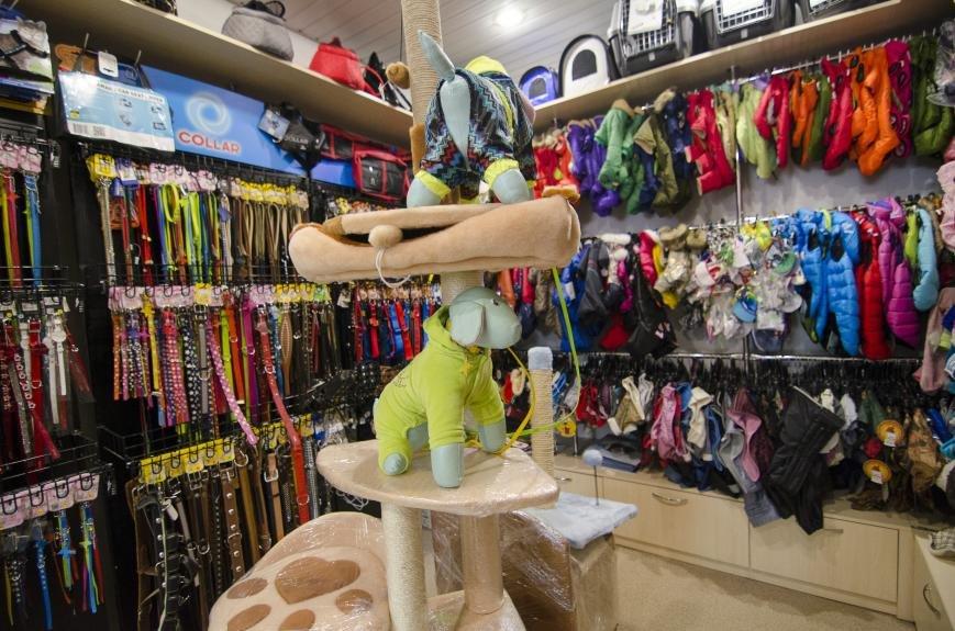 Каменской зоомагазин «Пес Барбос» отпраздновал день рождения, фото-10
