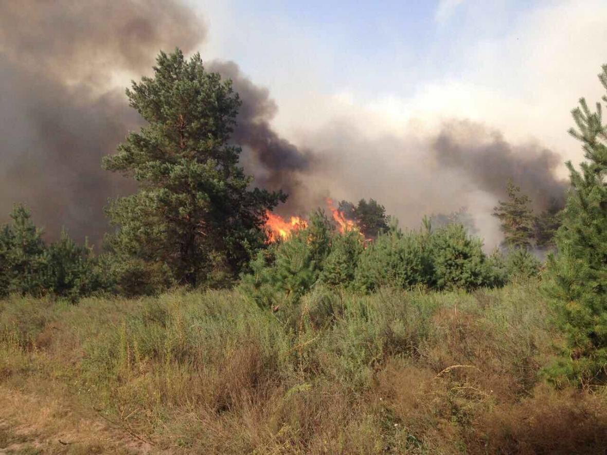 Лесной пожар вблизи Каменского локализовали , фото-3