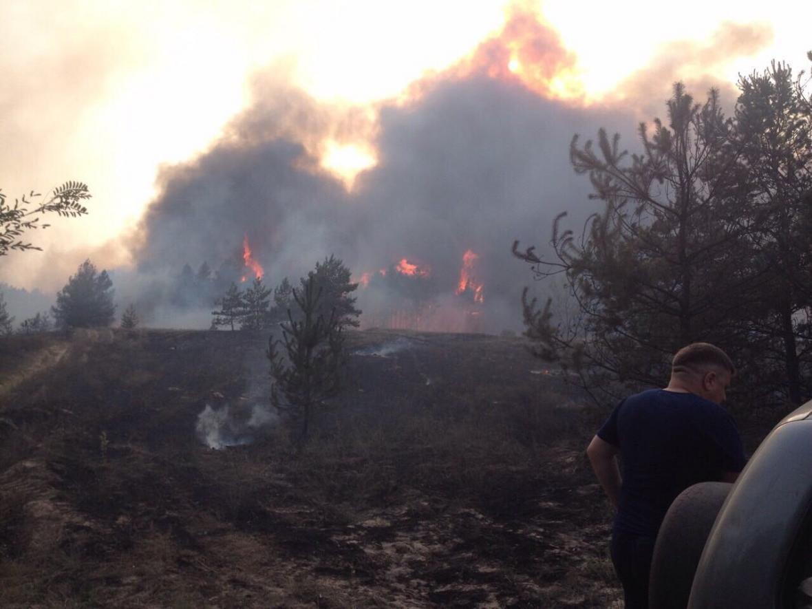 Лесной пожар вблизи Каменского локализовали , фото-1