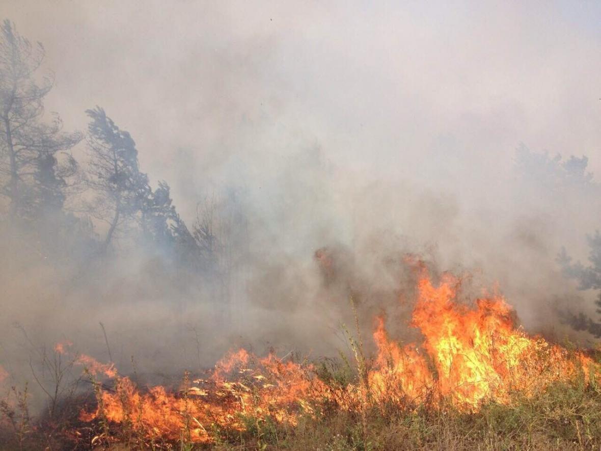 Лесной пожар вблизи Каменского локализовали , фото-2