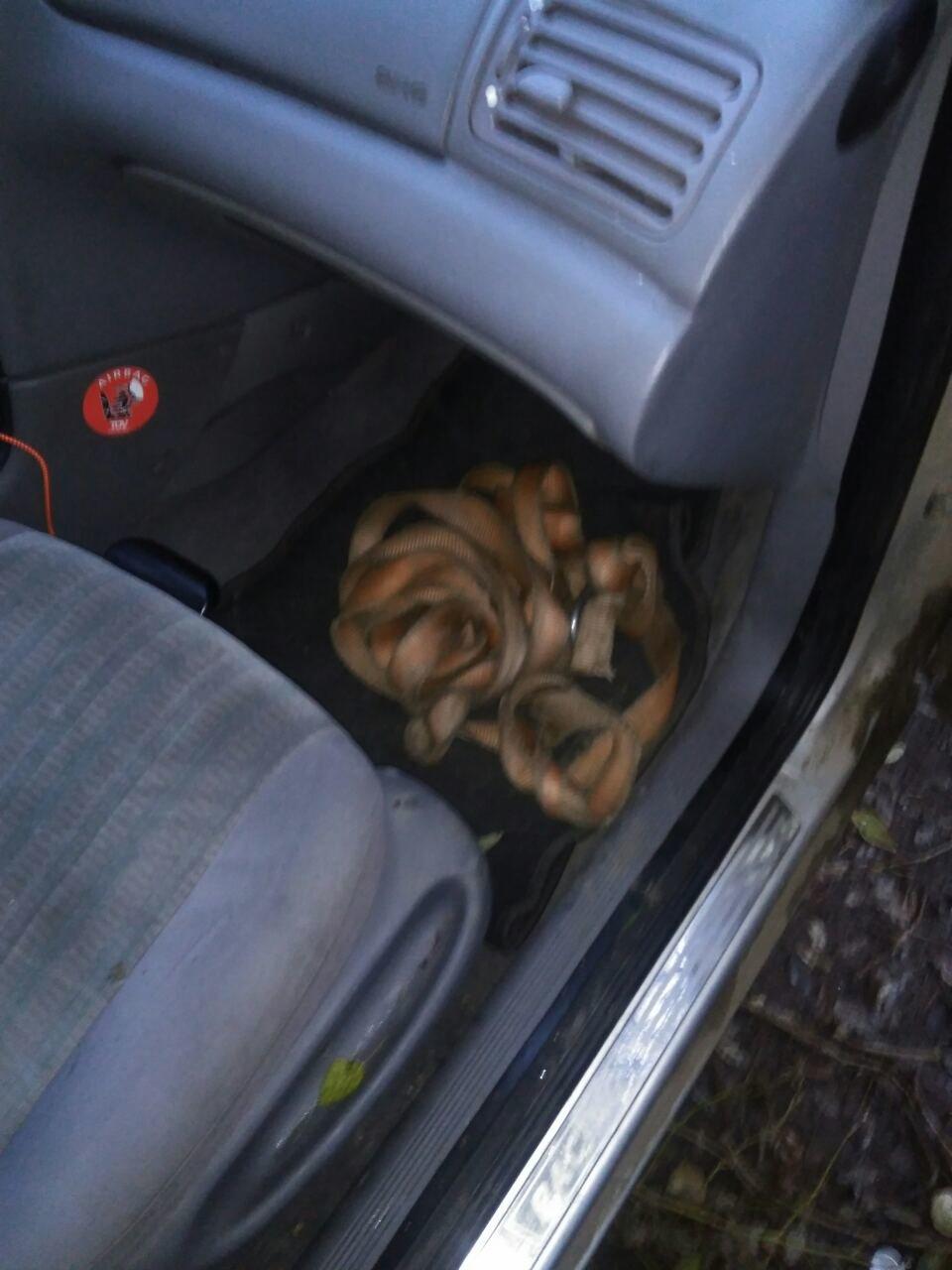 В Каменском воровали кабель с помощью автомобиля , фото-1