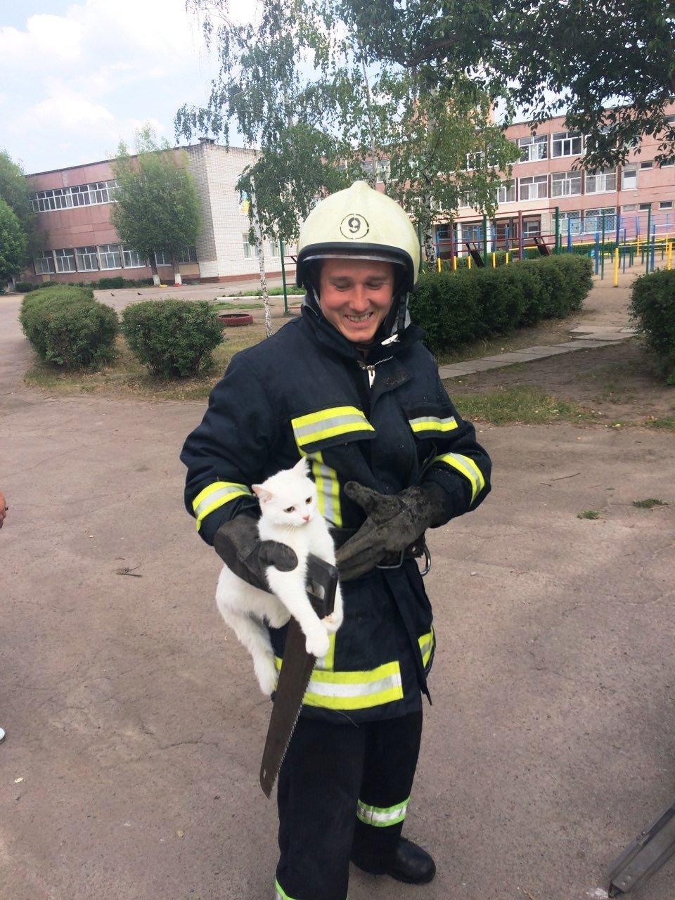 Из жизни спасателей: в Каменском помогали коту, фото-4