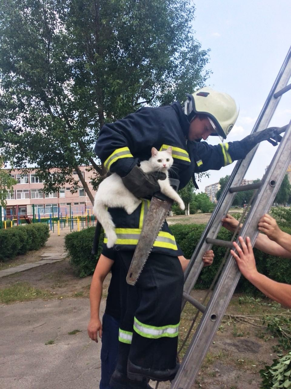 Из жизни спасателей: в Каменском помогали коту, фото-1