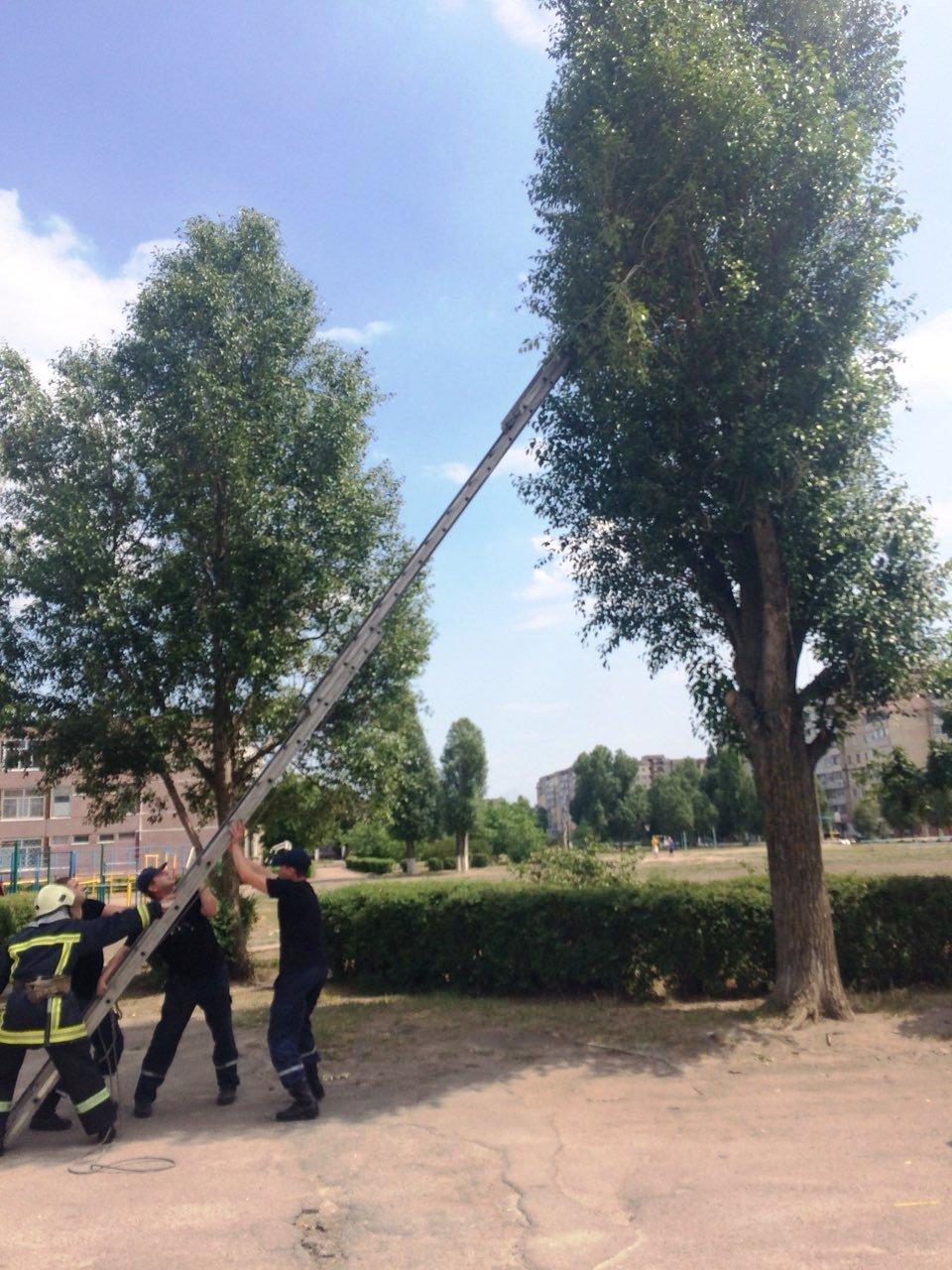 Из жизни спасателей: в Каменском помогали коту, фото-2