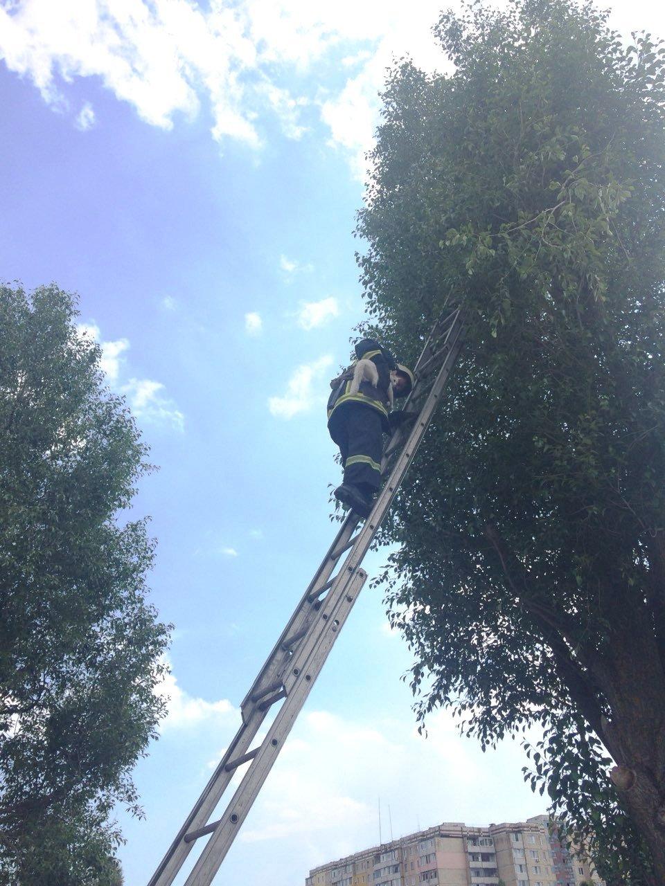 Из жизни спасателей: в Каменском помогали коту, фото-3