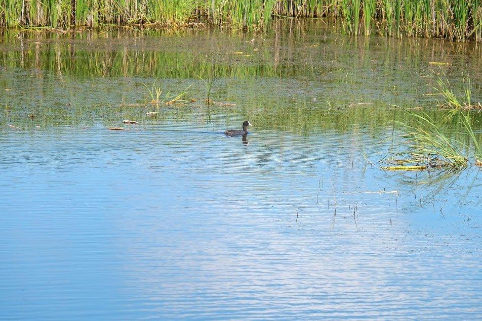 Завершается восстановление одной из рек вблизи Каменского, фото-2