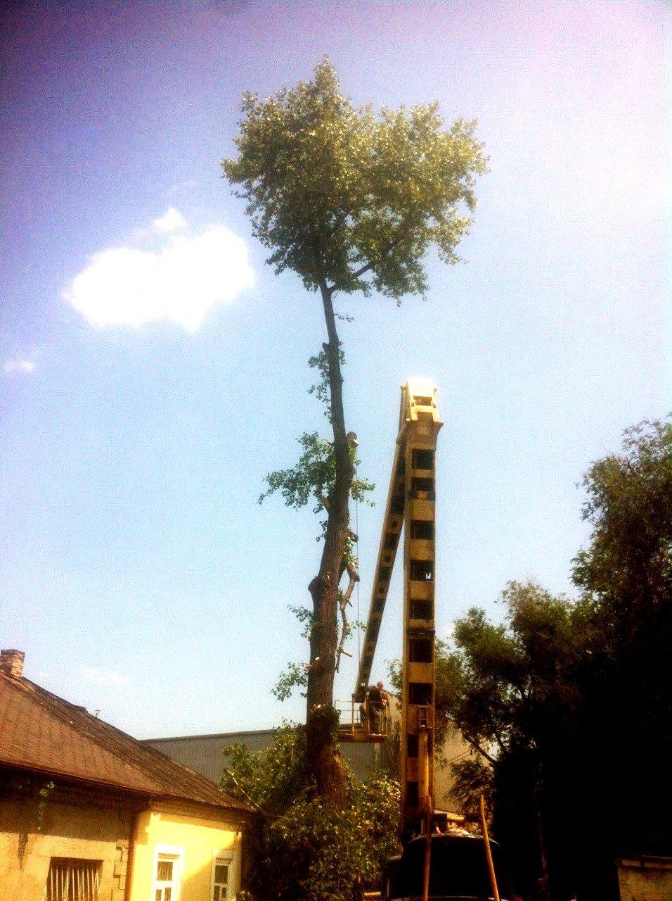 В Заводском районе Каменского завершили ликвидацию последствий непогоды, фото-4