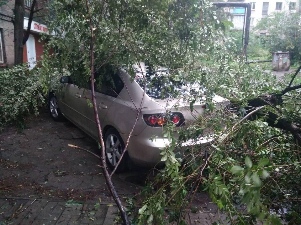 Стихия страшна и непредсказуема: непогода в Каменском валит деревья, фото-3
