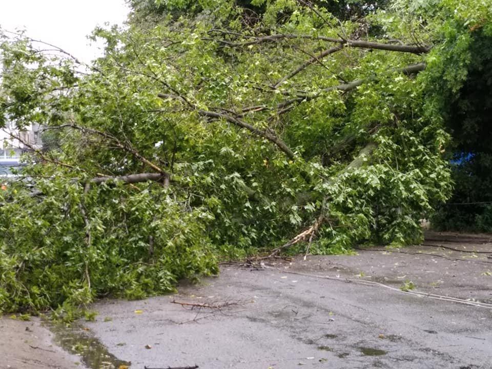 Стихия страшна и непредсказуема: непогода в Каменском валит деревья, фото-2