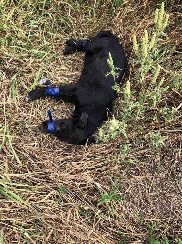 Издевательство над щенком в Днепре: обмотали изолентой и бросили умирать, фото-3