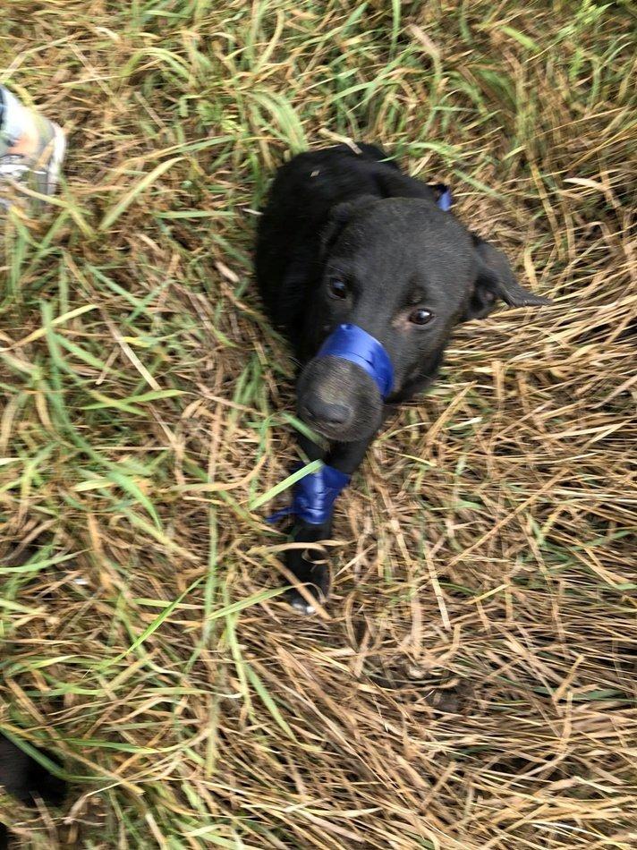 Издевательство над щенком в Днепре: обмотали изолентой и бросили умирать, фото-1