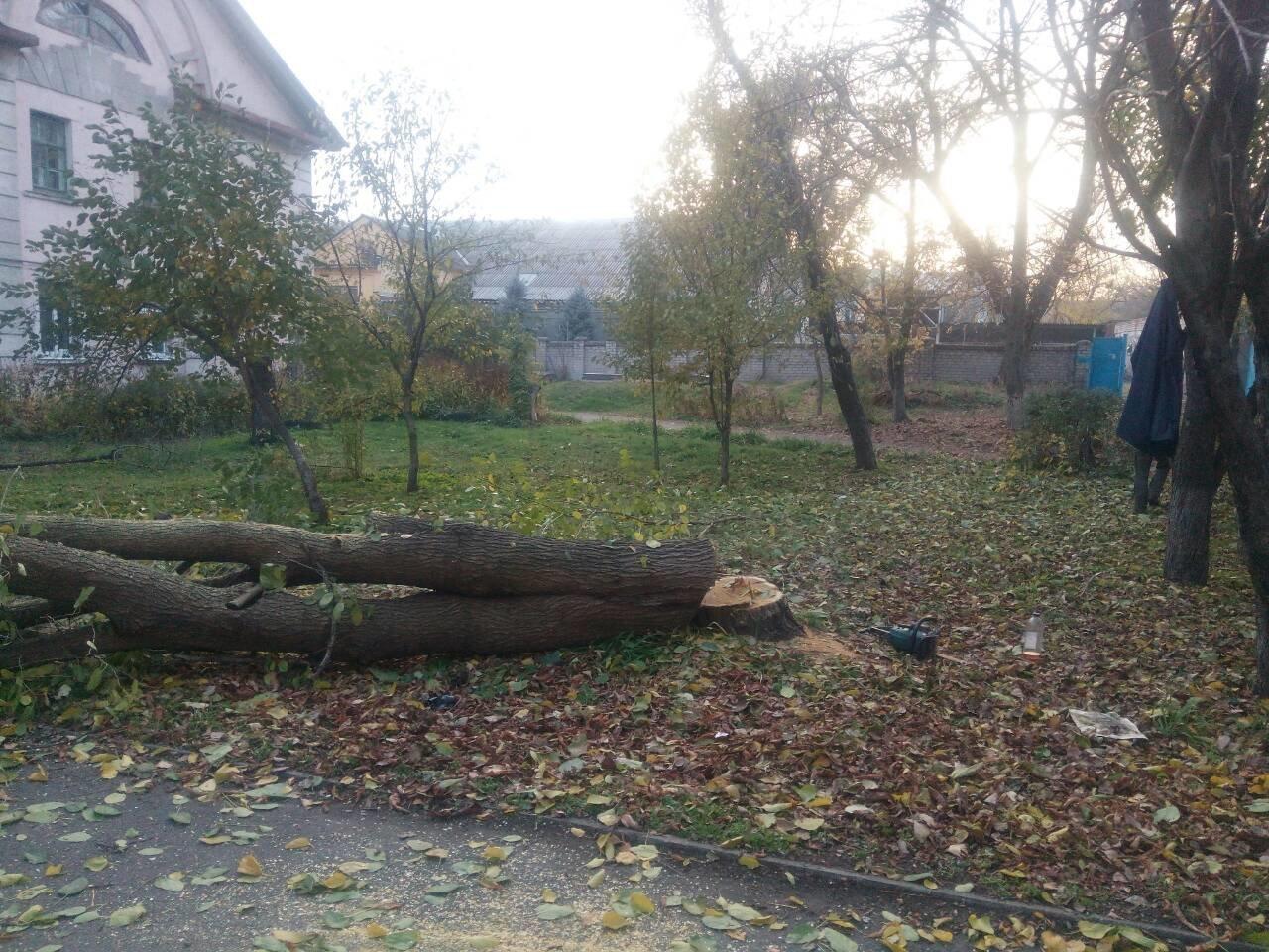 Незаконная вырубка деревьев: работники каменской «Муниципальной гвардии» задержали подозреваемых, фото-3