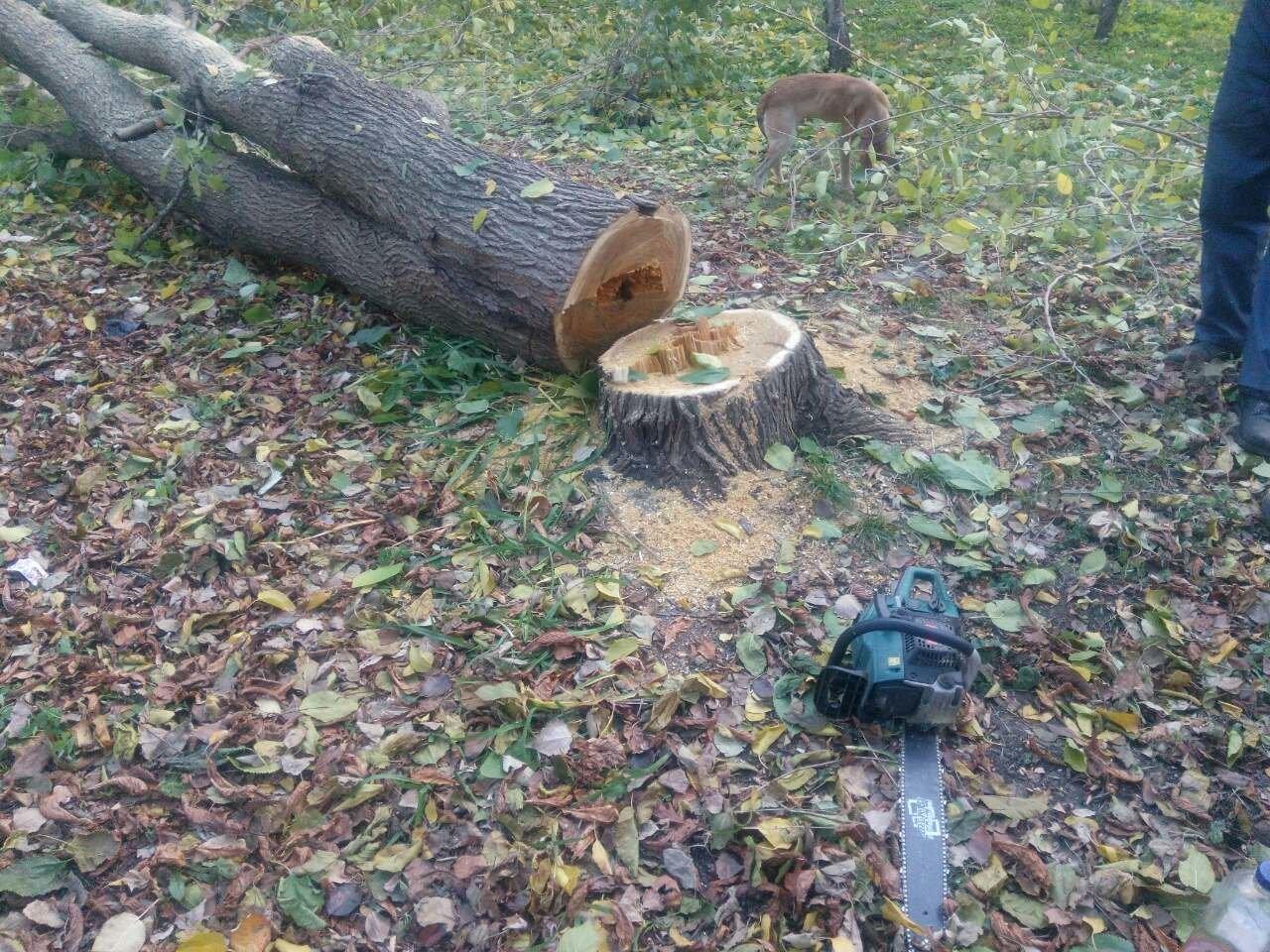 Незаконная вырубка деревьев: работники каменской «Муниципальной гвардии» задержали подозреваемых, фото-2
