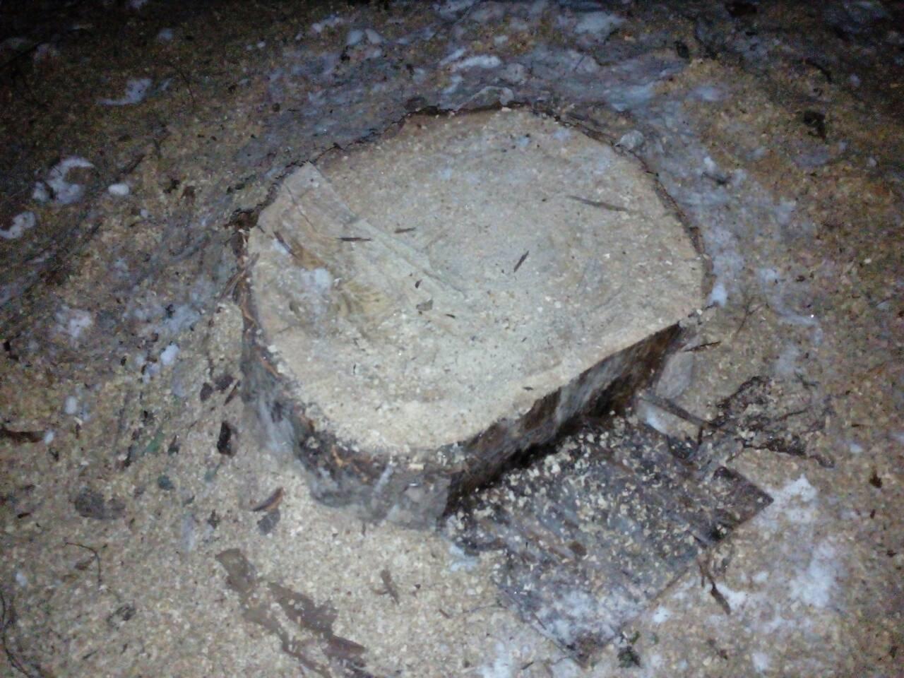 Запасались дровами: каменские гвардейцы пресекли незаконную вырубку деревьев, фото-1