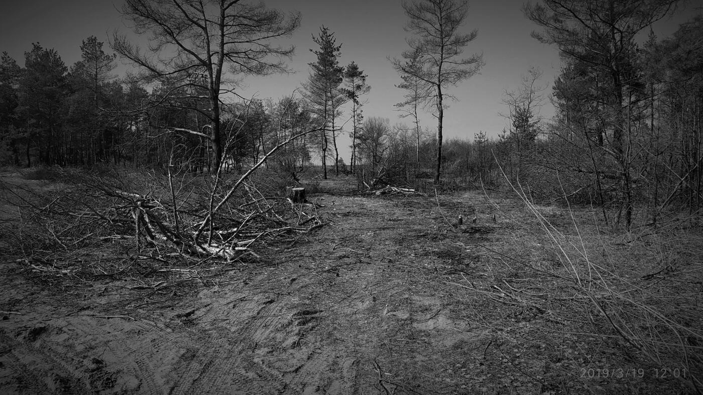 «Лес горит, а домики растут»: каменчанин опубликовал мрачные фото леса вблизи «Голубого озера», фото-7
