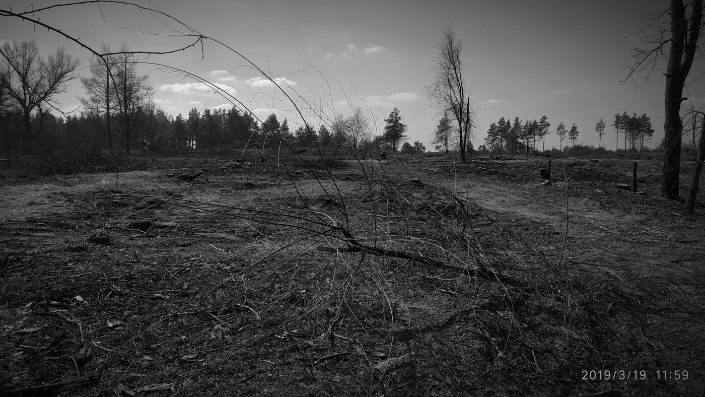 «Лес горит, а домики растут»: каменчанин опубликовал мрачные фото леса вблизи «Голубого озера», фото-9