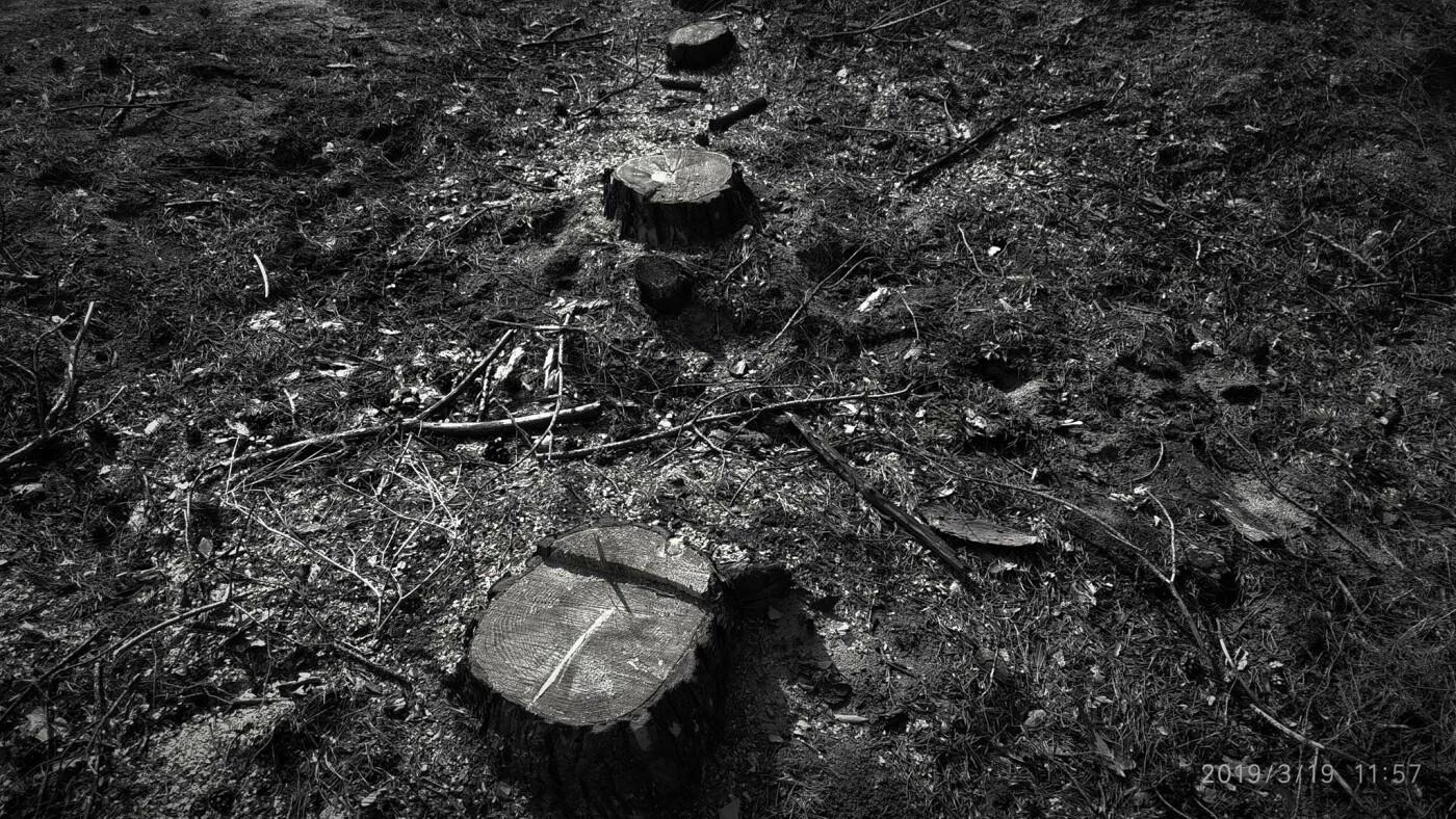 «Лес горит, а домики растут»: каменчанин опубликовал мрачные фото леса вблизи «Голубого озера», фото-2