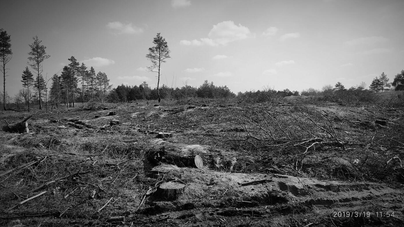 «Лес горит, а домики растут»: каменчанин опубликовал мрачные фото леса вблизи «Голубого озера», фото-1