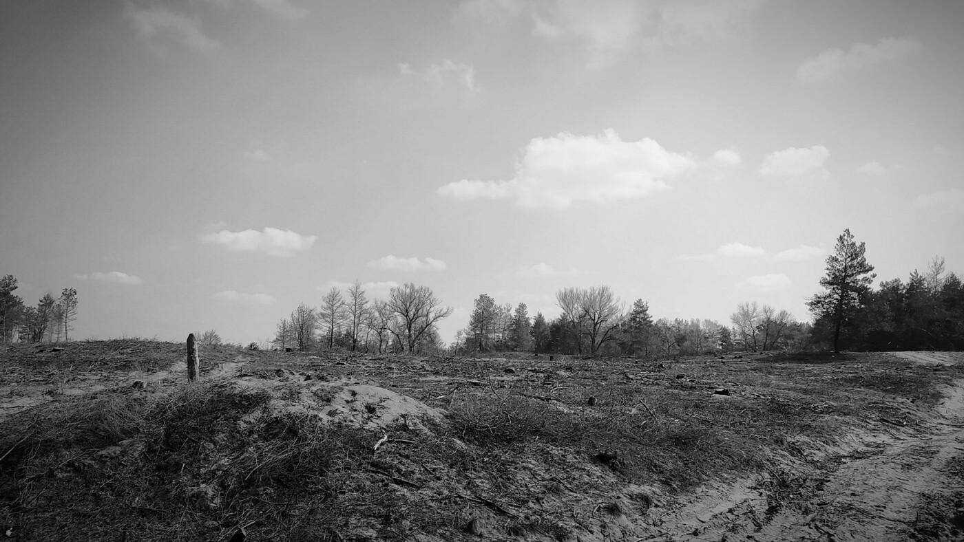 «Лес горит, а домики растут»: каменчанин опубликовал мрачные фото леса вблизи «Голубого озера», фото-6