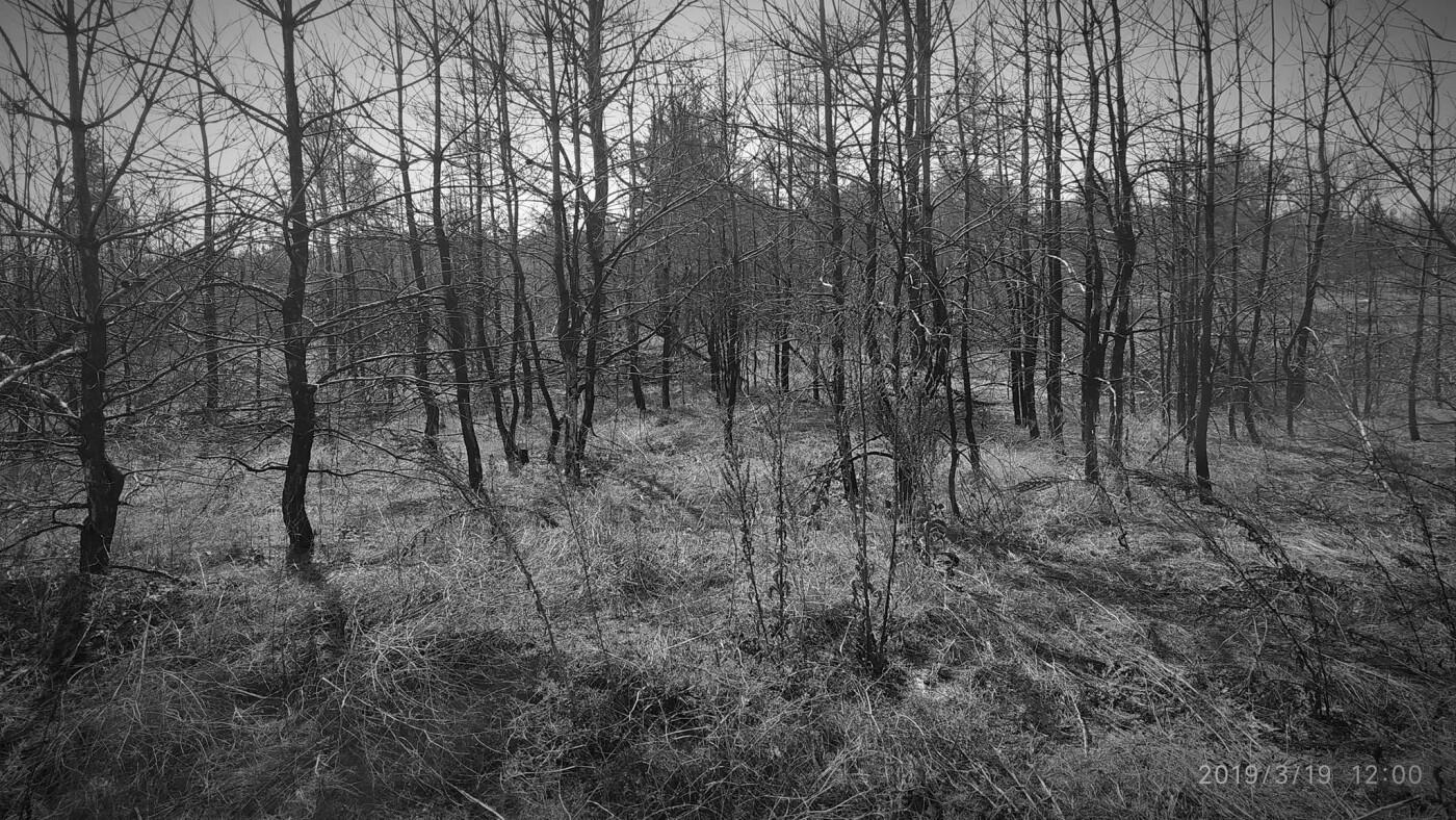 «Лес горит, а домики растут»: каменчанин опубликовал мрачные фото леса вблизи «Голубого озера», фото-8