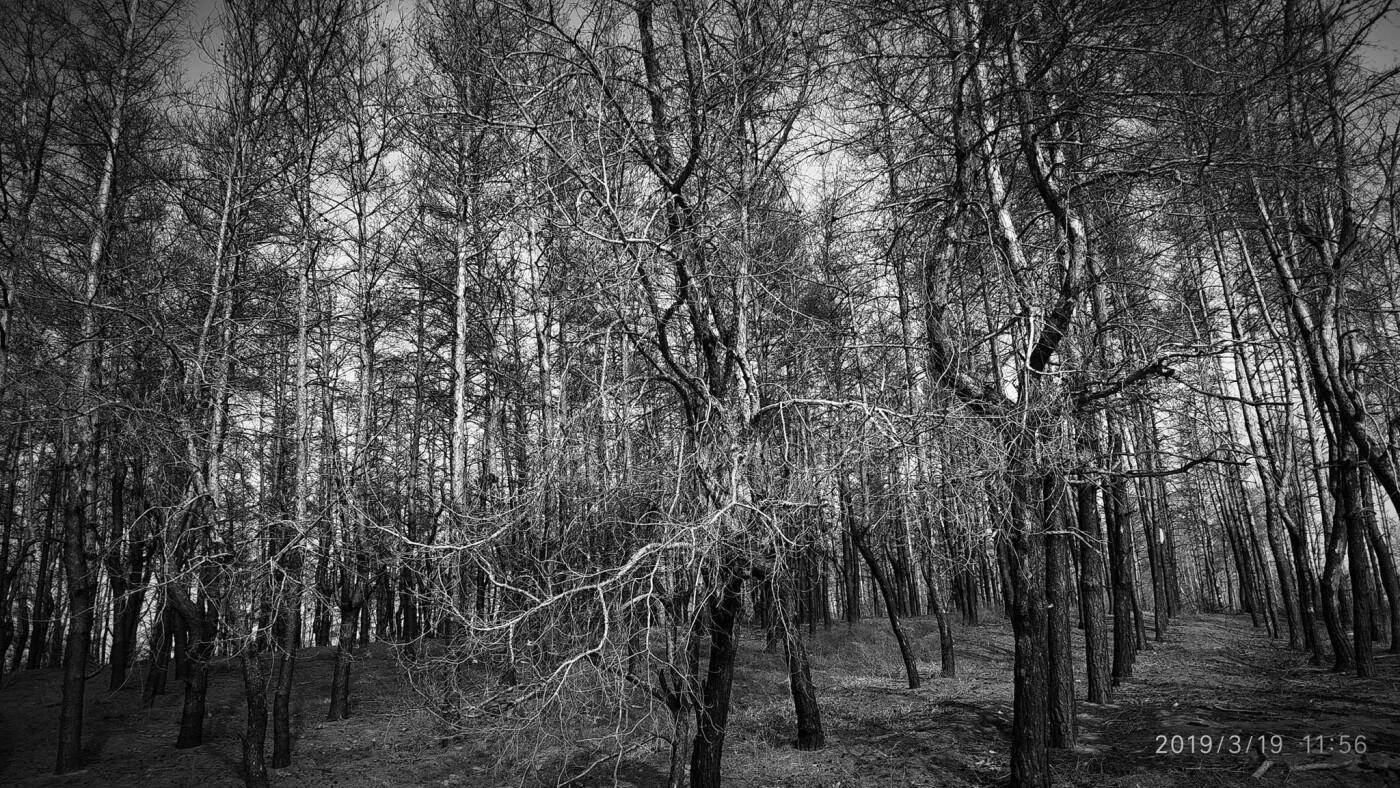 «Лес горит, а домики растут»: каменчанин опубликовал мрачные фото леса вблизи «Голубого озера», фото-10
