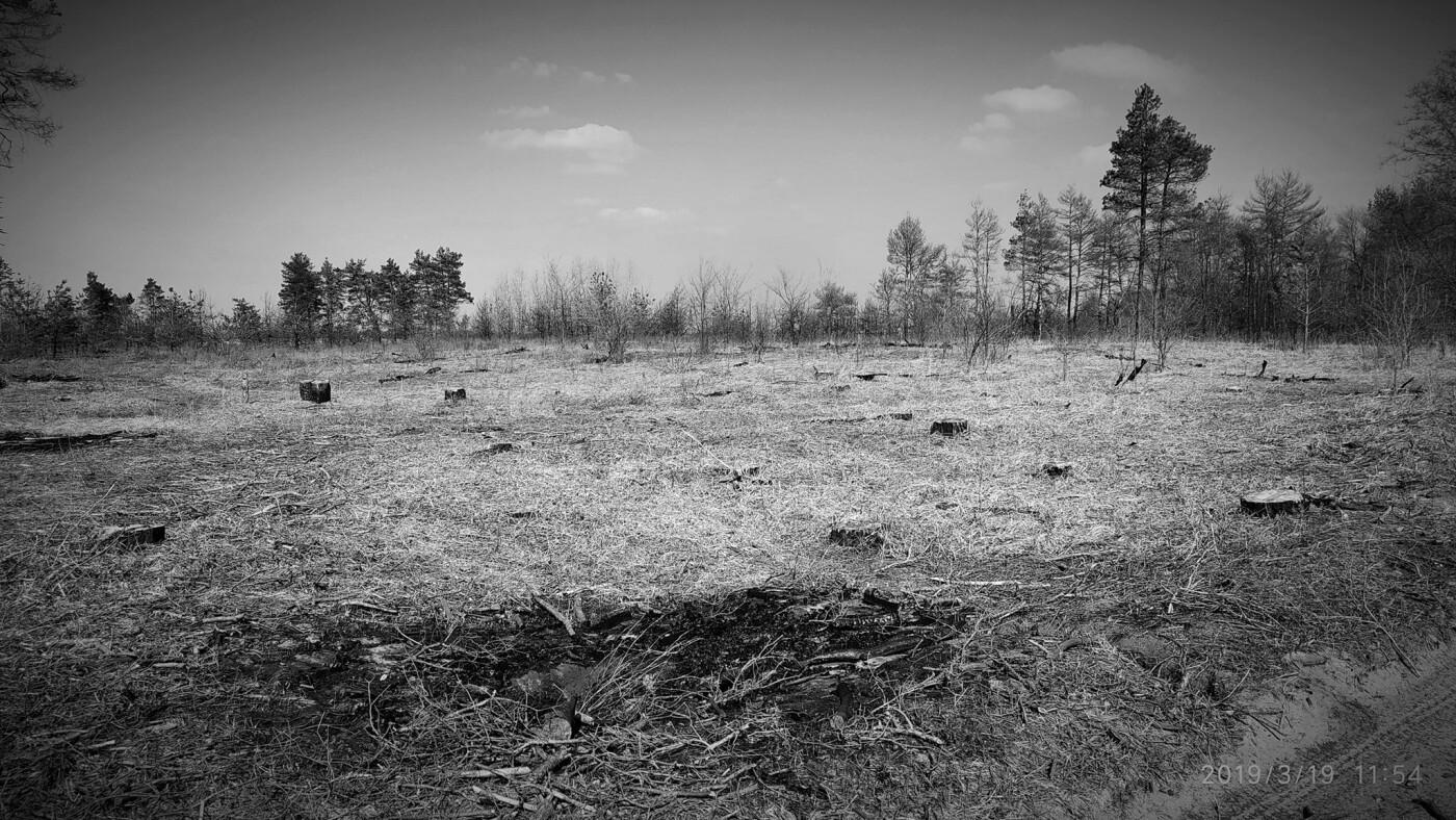 «Лес горит, а домики растут»: каменчанин опубликовал мрачные фото леса вблизи «Голубого озера», фото-3