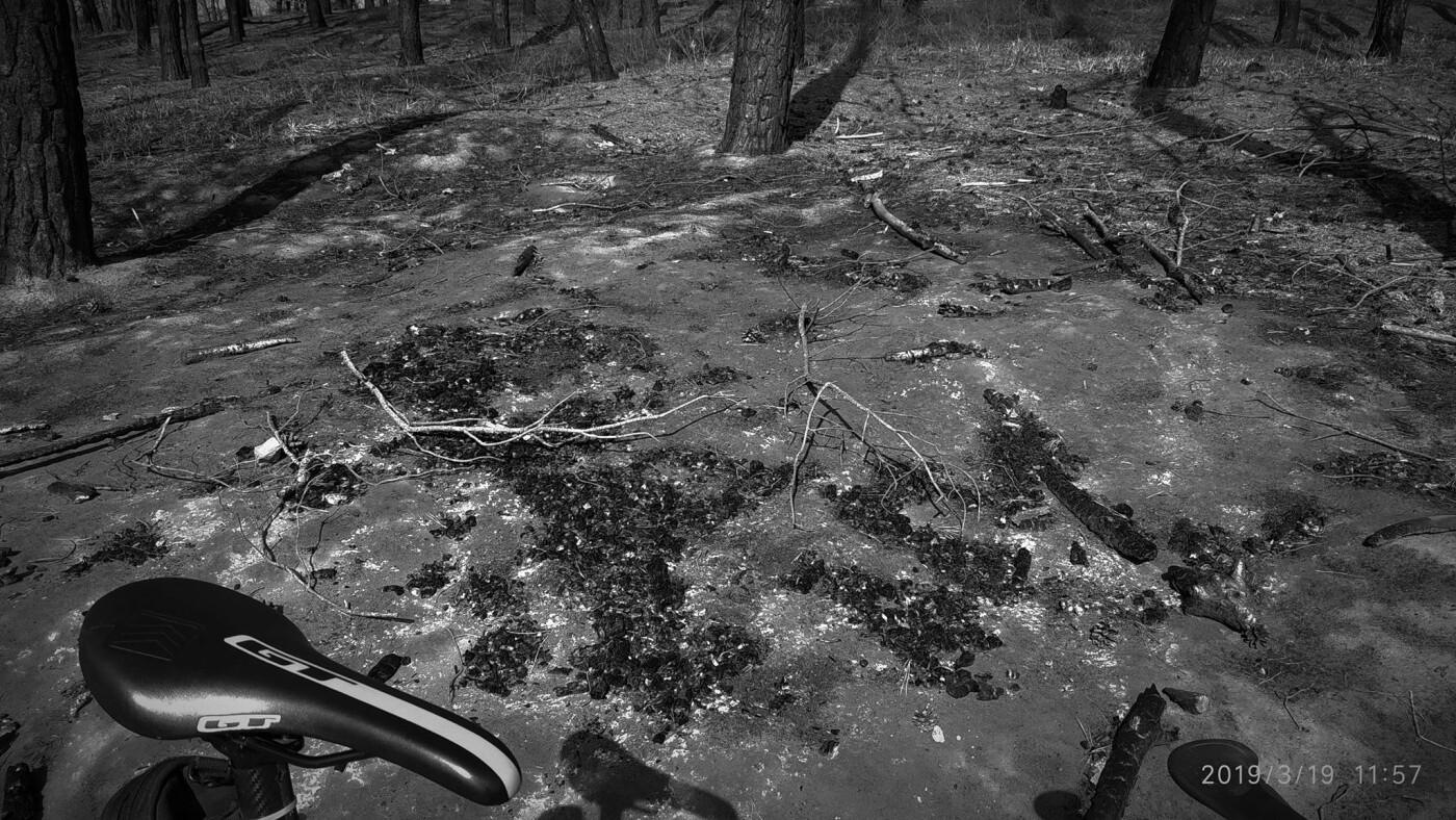 «Лес горит, а домики растут»: каменчанин опубликовал мрачные фото леса вблизи «Голубого озера», фото-5