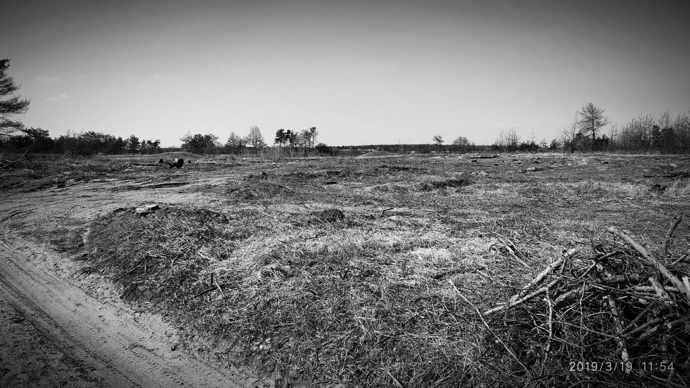«Лес горит, а домики растут»: каменчанин опубликовал мрачные фото леса вблизи «Голубого озера», фото-4