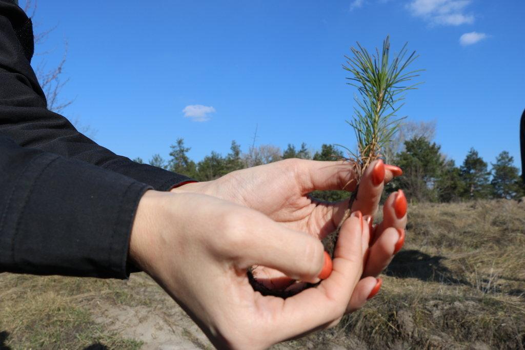 """""""Посади дерево своими руками"""": в Каменском стартовала экологическая акция , фото-1"""