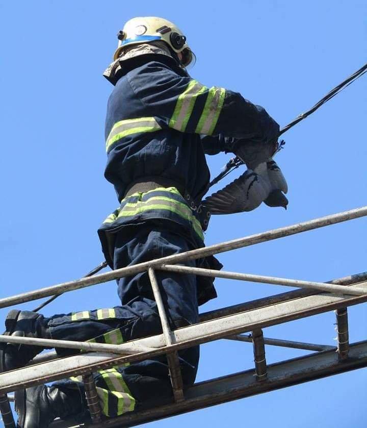 Каменские спасатели освободили голубя, который запутался в проводах, фото-1