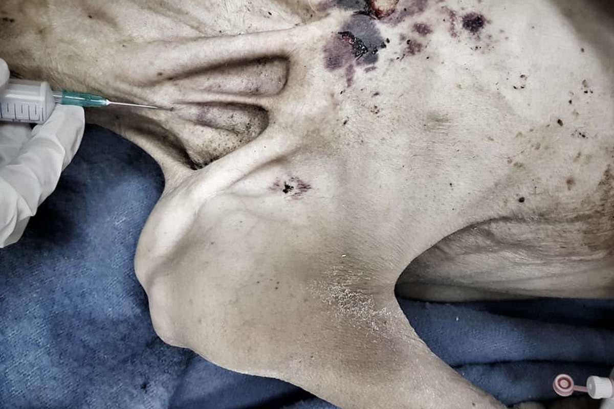 «На пороге смерти»: в Днепре сын привез крайне истощенную мать в больницу, фото-1