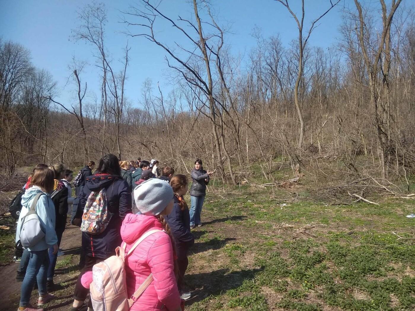 «Варварски вырублены деревья»: каменские экологи бьют тревогу, фото-6