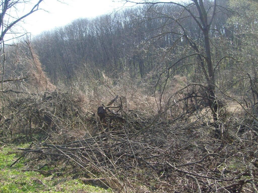 «Варварски вырублены деревья»: каменские экологи бьют тревогу, фото-1